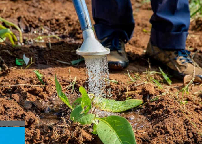 Scaling Solar Irrigation to Fight the Global Food Crisis: Why Subsidies Could be the Solution